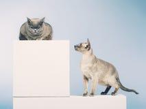 两只猫 免版税图库摄影