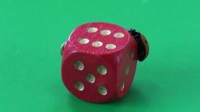 两只瓢虫在红色比赛模子的瓢虫ladyluck 股票视频