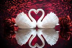 两只白色可爱的天鹅 免版税库存照片