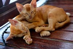 两只睡觉红色猫 库存图片