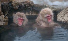 两只短尾猿在温泉长野县,日本 免版税库存照片