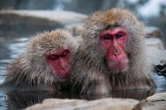 两只短尾猿在温泉长野县,日本 免版税库存图片