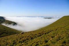 两只绵羊在道路旁边的A有薄雾的早晨在布雷肯比肯斯山国家公园 免版税库存照片