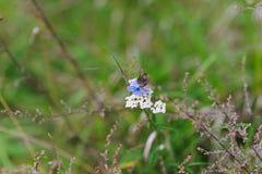 两只美丽的五颜六色的蝴蝶 库存图片