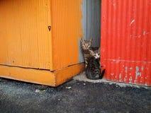 两只美丽的害羞的猫 库存图片