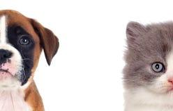 两只美丽的小狗、猫和狗 库存图片