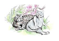 两只肥胖猫 皇族释放例证