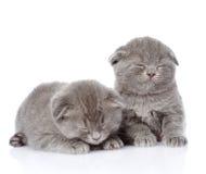两只英国shorthair小猫睡觉 查出在白色 免版税库存照片
