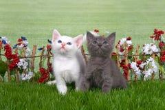 两只蓬松小猫在花园里 免版税库存照片