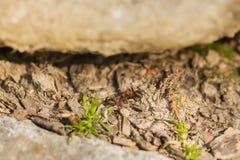 两只蚂蚁在庭院里 库存图片