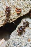 两只蚂蚁外面在庭院里 库存图片