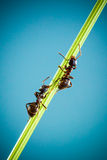 两只蚂蚁 库存图片