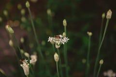 两只蜂和两朵开花的花 免版税库存图片