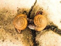 两只蜗牛亲吻 库存照片
