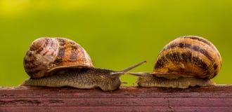 两只蜗牛故事  竞争 免版税库存图片