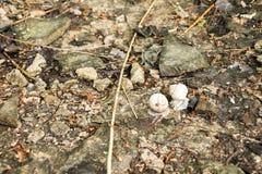 两只蜗牛本质上 蜗牛寻找一个繁殖的对 免版税图库摄影