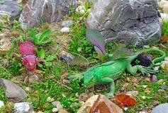 两只蜥蜴塑料数值在假山花园 库存照片