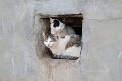 两只街道猫在方孔坐墙壁 免版税图库摄影
