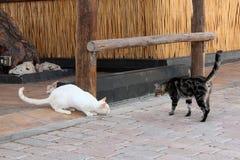 两只街道猫 免版税库存照片
