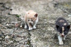 两只被放弃的小猫 免版税库存照片