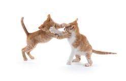 两只逗人喜爱小猫使用 免版税库存图片