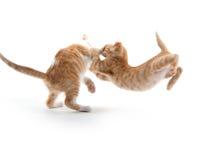两只逗人喜爱小猫使用 库存照片