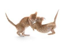 两只逗人喜爱小猫使用 免版税图库摄影