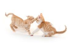两只逗人喜爱小猫使用 图库摄影