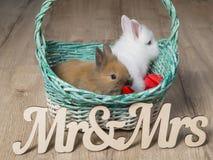 两只逗人喜爱的兔子特写镜头在一个白色篮子的 库存照片