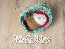 两只逗人喜爱的兔子特写镜头在一个白色篮子的 免版税库存照片