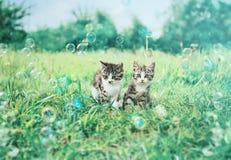 两只逗人喜爱的小猫在夏天 免版税库存图片
