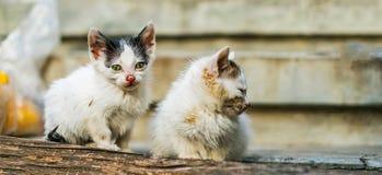 两只逗人喜爱的小猫坐一个长木凳 免版税库存图片