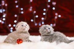 两只逗人喜爱的小猫坐白色毛皮 图库摄影