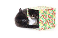 两只逗人喜爱的小猫 免版税库存照片