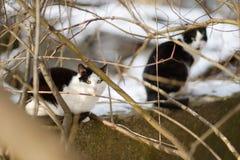 两只逗人喜爱的猫在冬天 库存图片