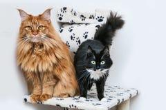两只逗人喜爱的猫在戏剧房子站立 免版税图库摄影