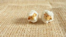 两只逗人喜爱的绵羊在农场 免版税库存图片