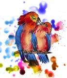 两只逗人喜爱的鹦鹉 免版税库存照片
