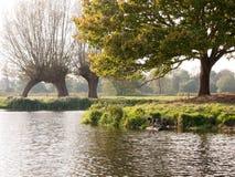 两只野鸭在湖表面场面的木头栖息 库存图片
