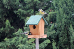 两只鸟北美山雀 库存图片