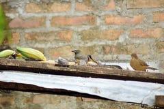 两只鸟吃 免版税图库摄影