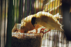 两只鸟吃 免版税库存照片