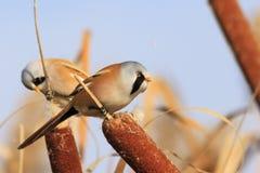 两只鸟在丛林中吃 免版税库存照片
