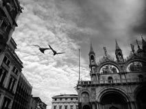两只鸟在教会旁边的天空飞行 免版税库存图片