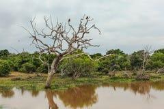 两只鸟坐一棵死的树在棕色泥泞的湖 库存图片