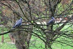 两只鸟坐分支 图库摄影
