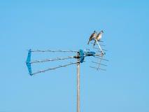 两只鸟坐天线 免版税库存图片