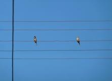 两只鸟坐导线 免版税库存照片