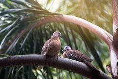 两只鸟坐棕榈分支 库存图片