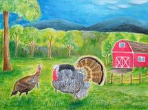 两只鸟火鸡在农场 库存照片
